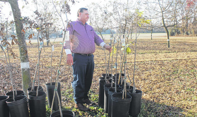 Eddie Faircloth observes new pecan trees on his farm.                                  File Photo | Sampson Independent
